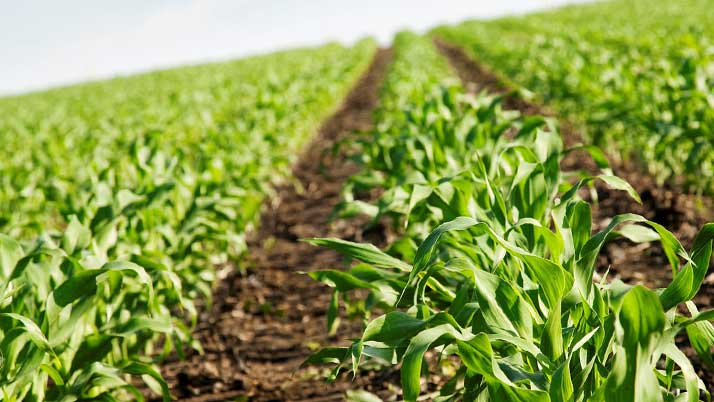 New network to grow Coast's food and agribusiness sector